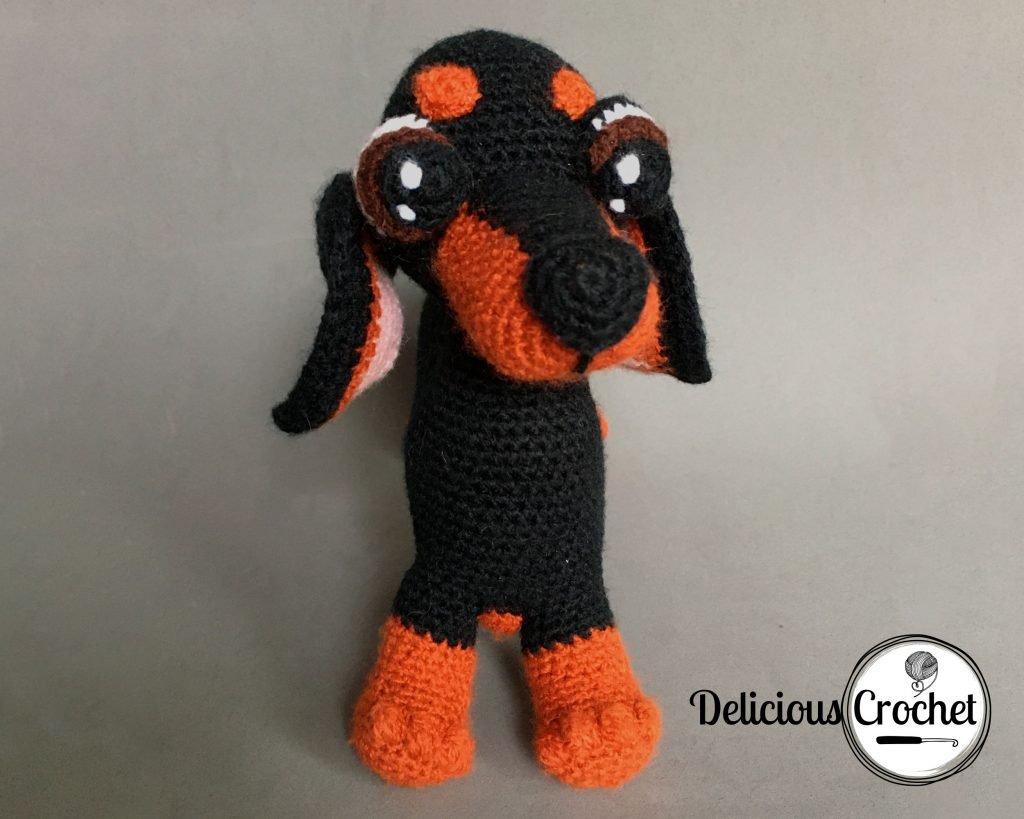 Olivia The Dachshund Puppy